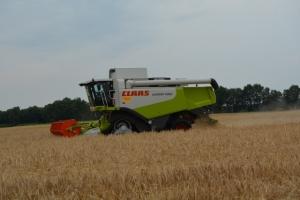 Getreide - Bild 1