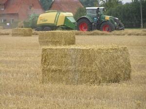 Getreide - Bild 2