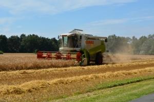 Getreide - Bild 4