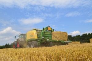 Getreide - Bild 5