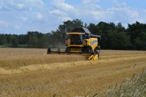 Getreide - Bild 6