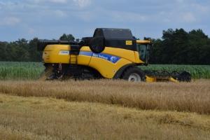 Getreide - Bild 7