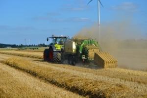 Getreide - Bild 8