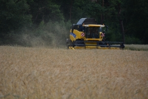Getreide - Bild 9