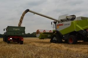 Getreide - Bild 11