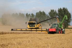 Getreide - Bild 12
