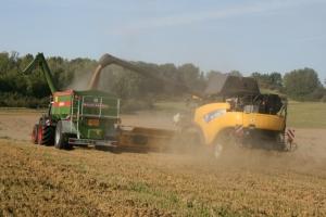 Getreide - Bild 13