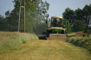 Gras - Bild 8